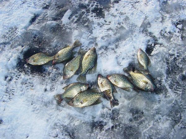Dutch Hollow Lake Photos - Sauk County, Wisconsin