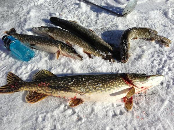 Lake and fishing information for crystal lake sheboygan for Crystal lake fishing