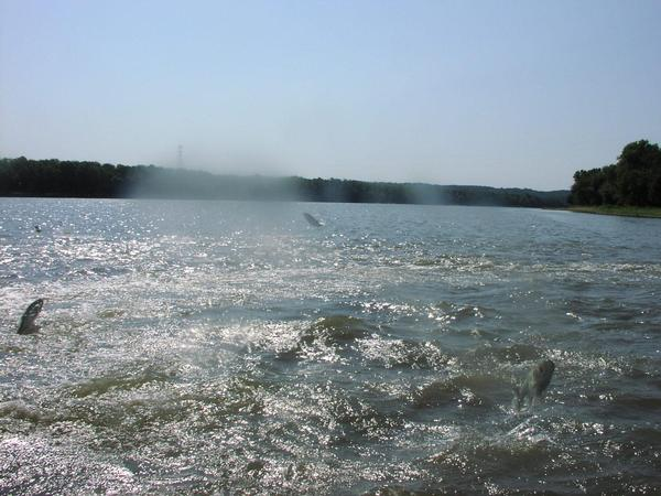 Lake and fishing information for senachwine lake putnam for Fishing lakes in illinois