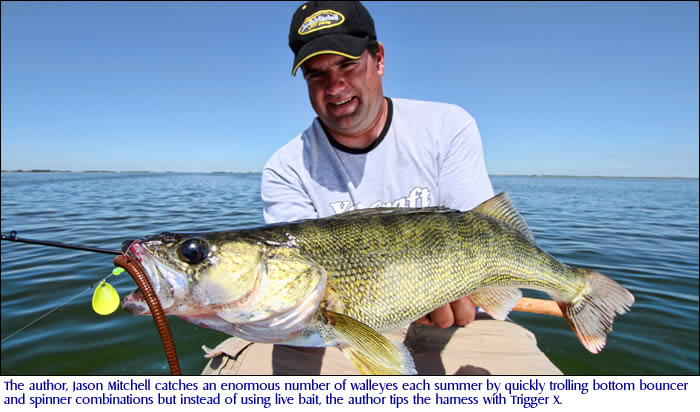 The author, Jason Mitchell catches an enormous number of walleyes each summer by quickly trolling bottom bouncer and spinner combinations but instead of using live bait, the author tips the harness with Trigger X.