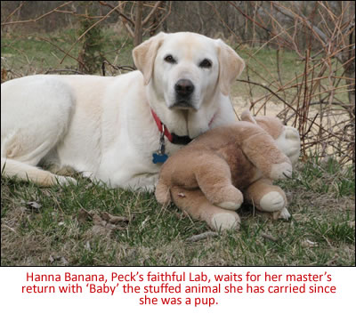 Hanna Banana, Peck's faithful Lab, waits for her master's return with 'Baby' the stuffed animal she has carried since she was a pup.