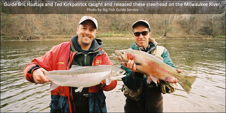 Guide Eric Haataja and Ted Kirkpatrick caught and released these steelhead on the Milwaukee River.