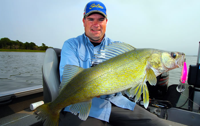 The author Jason Mitchell with a walleye caught trolling a Salmo Bullhead SDR.  Fall trolling patterns can produce some of the largest walleye of the season.