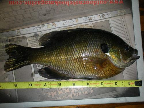 J c murphy lake newton county fishing reports and for Indiana fishing report