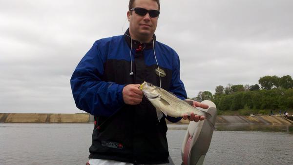 Onalaska spillway la crosse county fishing reports and for Lake onalaska fishing report