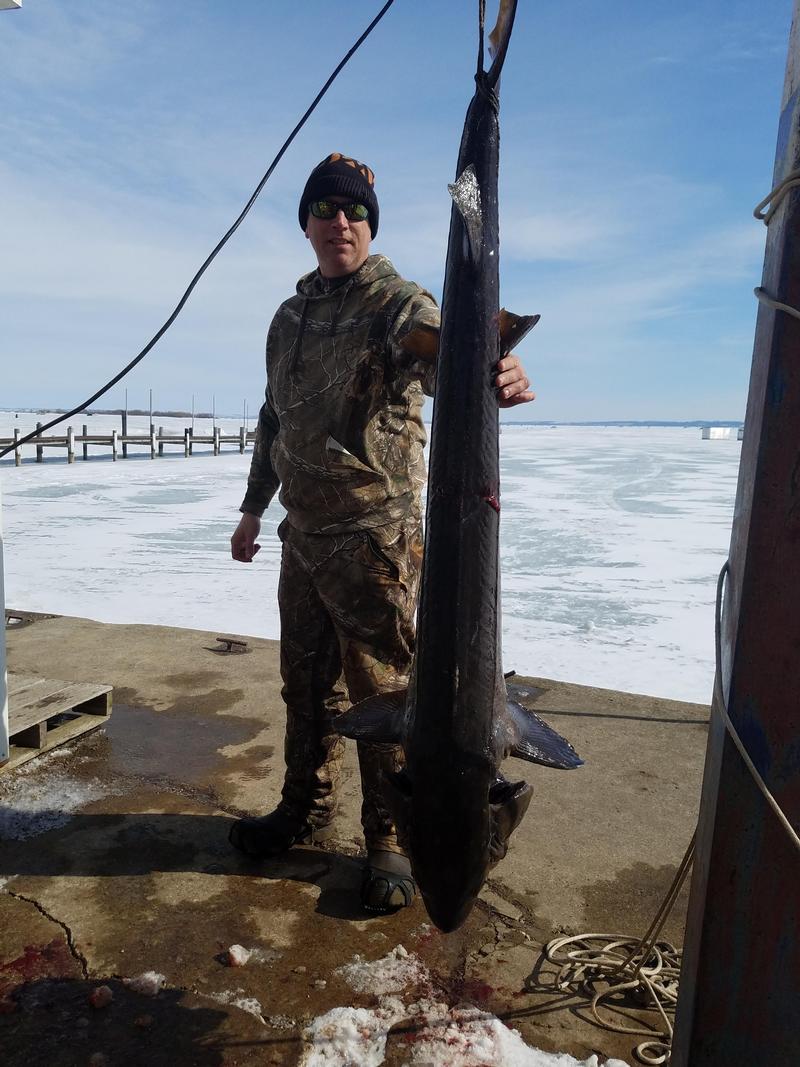 Sturgeon spearing winnebago county fishing reports and for Sturgeon fishing report