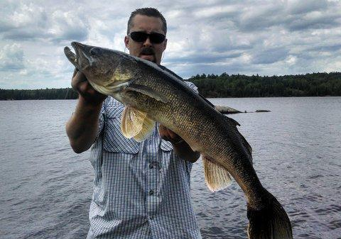 Nice walleyes being caught in ely area for Ely minnesota fishing