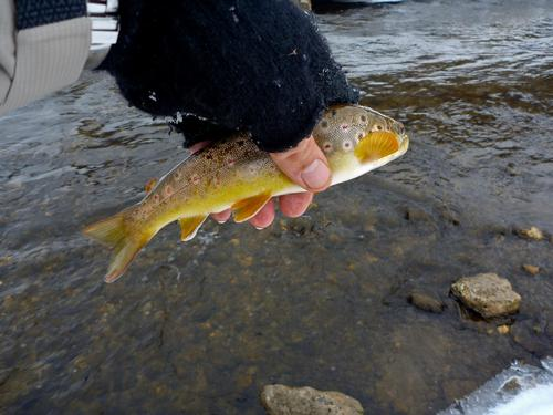Hay creek in red wing mn for Red wing fishing report
