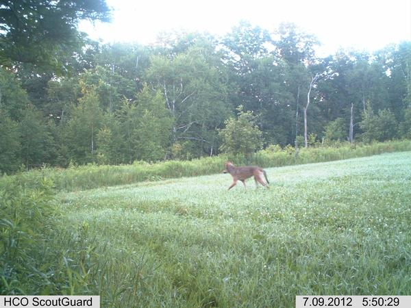 Wolf sighting site