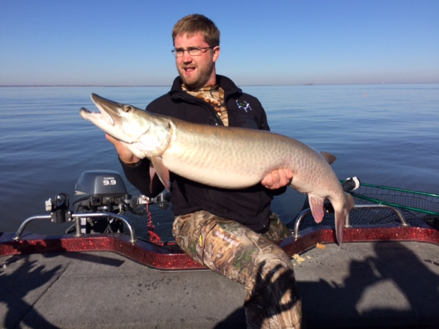 Green bay muskies fishing reports and discussions for Lake link fishing report