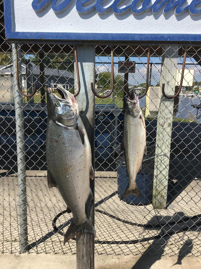 Michigan outdoornews download pdf for Michigan fish limits