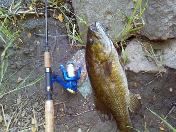 Fox river burlington rockchester waterford racine for Colorado fishing license walmart