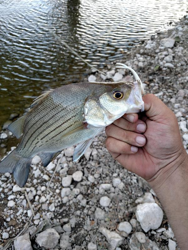 Fox river la salle county fishing reports and discussions for Fishing lakes in illinois