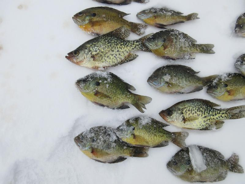 Ripley lake jefferson county fishing reports and discussions for Spikes fish house