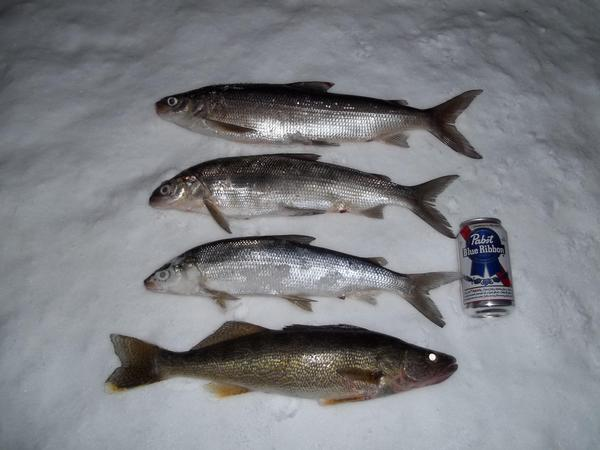 Green bay east shore dysksville fishing reports and for East bay fishing report
