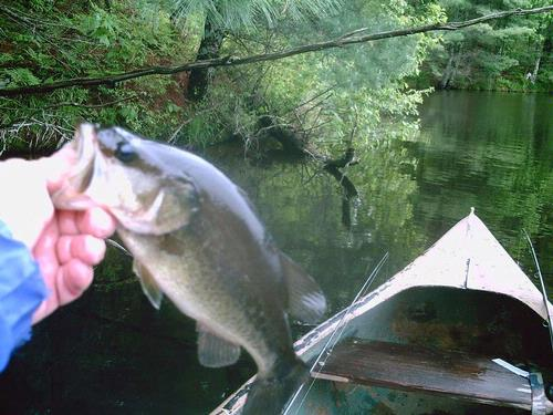 Coon fork lake fishing reports and discussions for Lake fork fishing hot spots