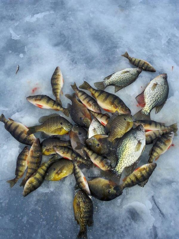 Partridge lake waupaca county fishing reports and discussions for Fremont wi fishing report