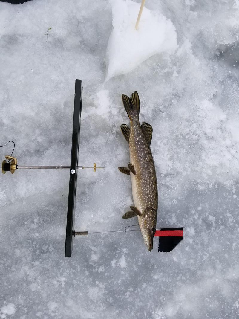Ice Fishing Tip Up Lights
