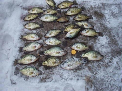Ice flies for Ice fishing flies
