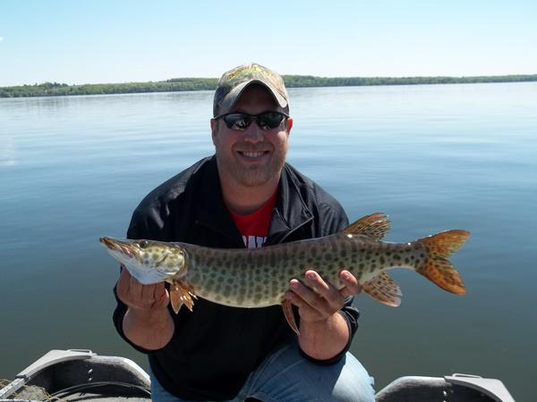 2012 musky pictures fishing reports and discussions for Lake link wi fishing reports