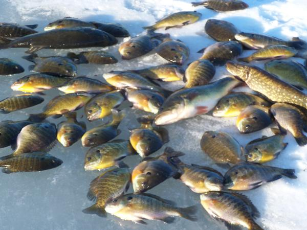 Fishing reports for west okoboji dickinson county iowa for Lake okoboji fishing