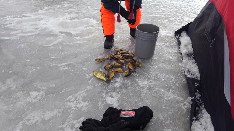 Mississippi river pool 8 lacrosse fishing reports and for Lake onalaska fishing report