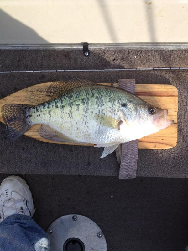 Fishing reports for lake of egypt bass report for Lake of egypt fishing report
