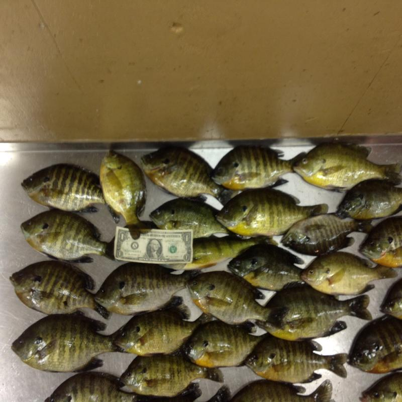 Bowstring chain sand lake for Bowstring fishing report