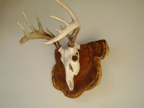 Diy deer skull mount plaque diy do it your self for European plaque template