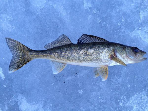 Fishing reports for silver lake du page county illinois for Illinois ice fishing reports