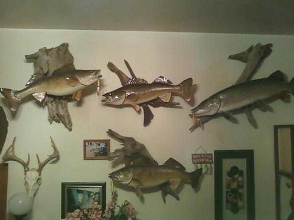 Where to go for walleye mount??? Post Pics