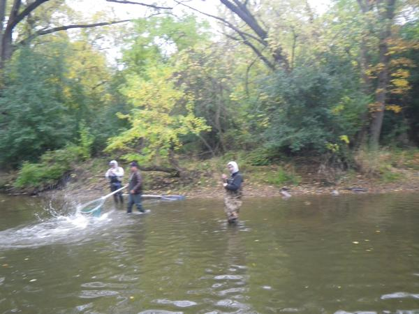 Fishing reports for root river racine county wisconsin for Lake link wi fishing reports