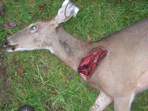 Image result for rage broadheads deer kills