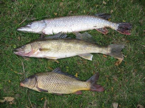 Fishing reports for kishwaukee river winnebago county for Illinois river fishing