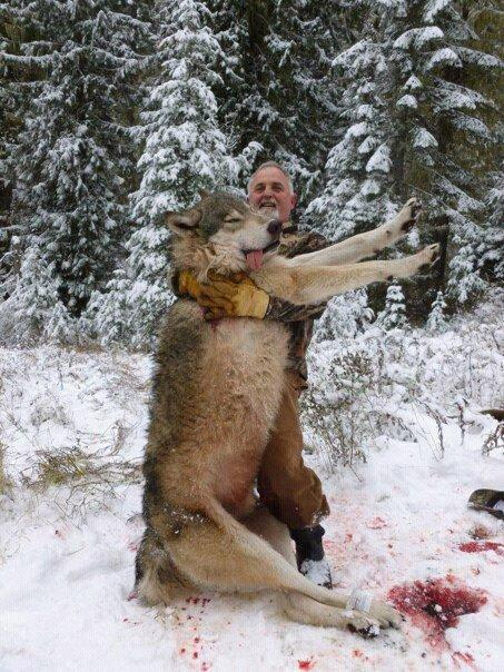 a discussion on wolf hunting Cic video channel food, values, and stories for the future: a vegetarian's journey to hunting 11 may 2018 panel discussion on sustainable meat: facts or fables.
