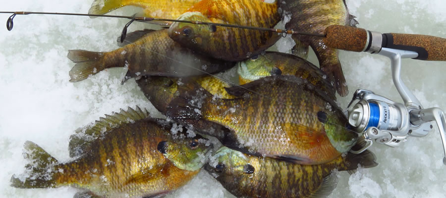 The Joy Of Winter Bluegills - One of the great things about ice fishing is that it gives us all a chance to slow down and take stock of the things that really matter.