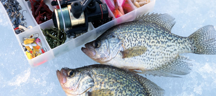Fine Tuning For More Walleyes - Some tips to help put more walleyes on the ice...