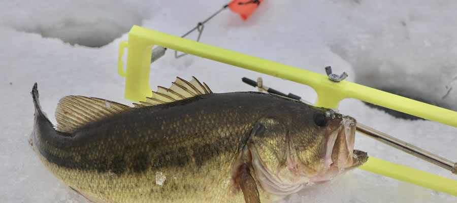 Proven Patterns For Hardwater Largemouth - The hardwater season represents an excellent opportunity to tussle with largemouth bass.