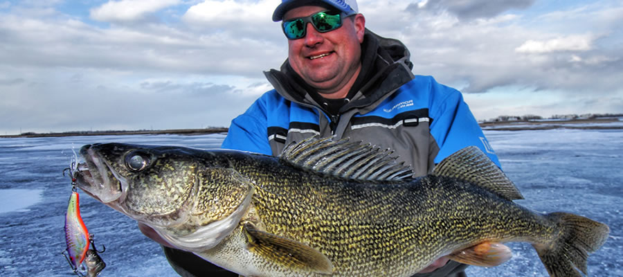 Late Ice Walleye - I love catching walleye any day of the year but what I love about late ice walleyes is the level of aggressiveness.